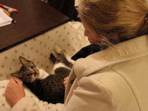留学生とこたつと猫