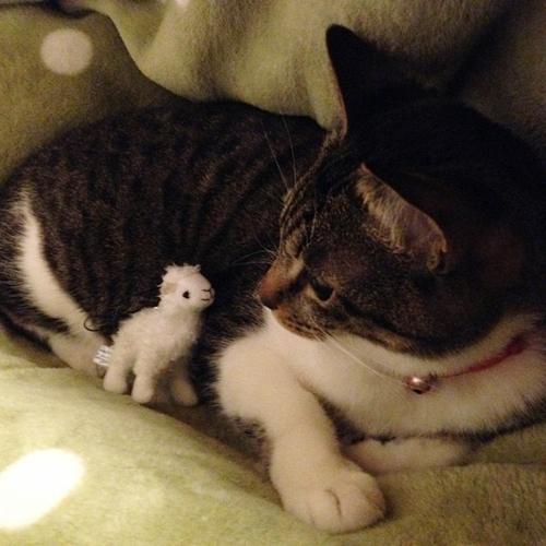 アルパカのマスコットと猫