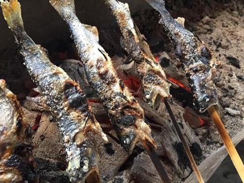 山女魚(ヤマメ)